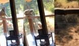 Niska : Des singes ont essayé de s'introduire dans la chambre d'hôtel du rappeur en Afrique du Sud